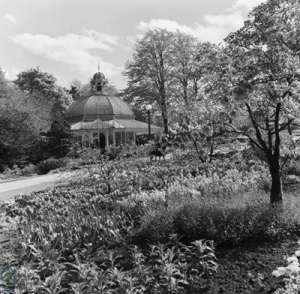 Harrogate, Valley Gardens, Scroll Bed, 1963